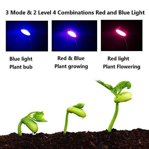 Buy GROWSTAR Led Grow Light 10W Plant Light Desk Grow Light